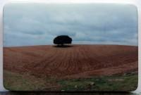 El primer árbol o el último III