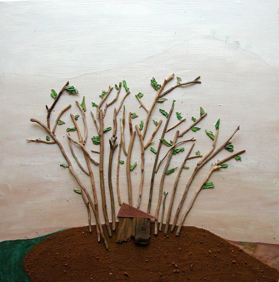 bosque de ana